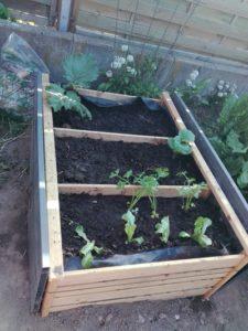 Hochbeet frisch bepflanzt