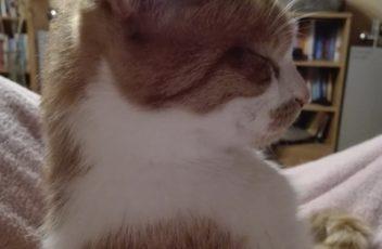 Katzenmeditation